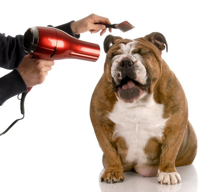 Basics of Dog Grooming